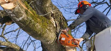 Lennox Head Tree Care