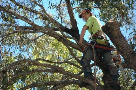 Tallow Tree Services Pty Ltd