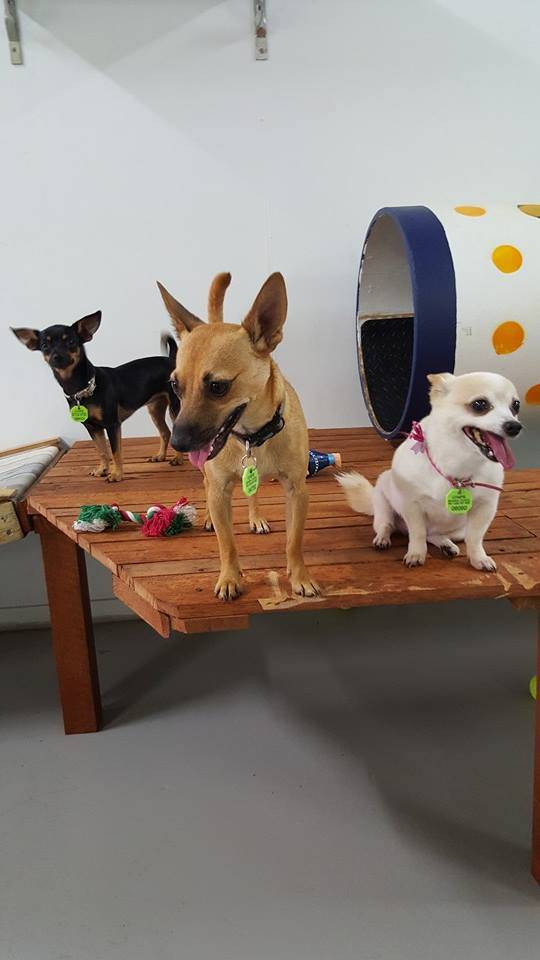 Gympie Doggy Day Care