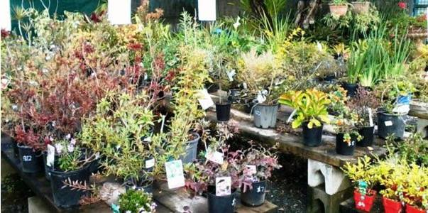 Murwillumbah Landscape Supplies