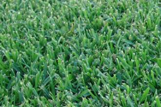Pialba Turf Supplies